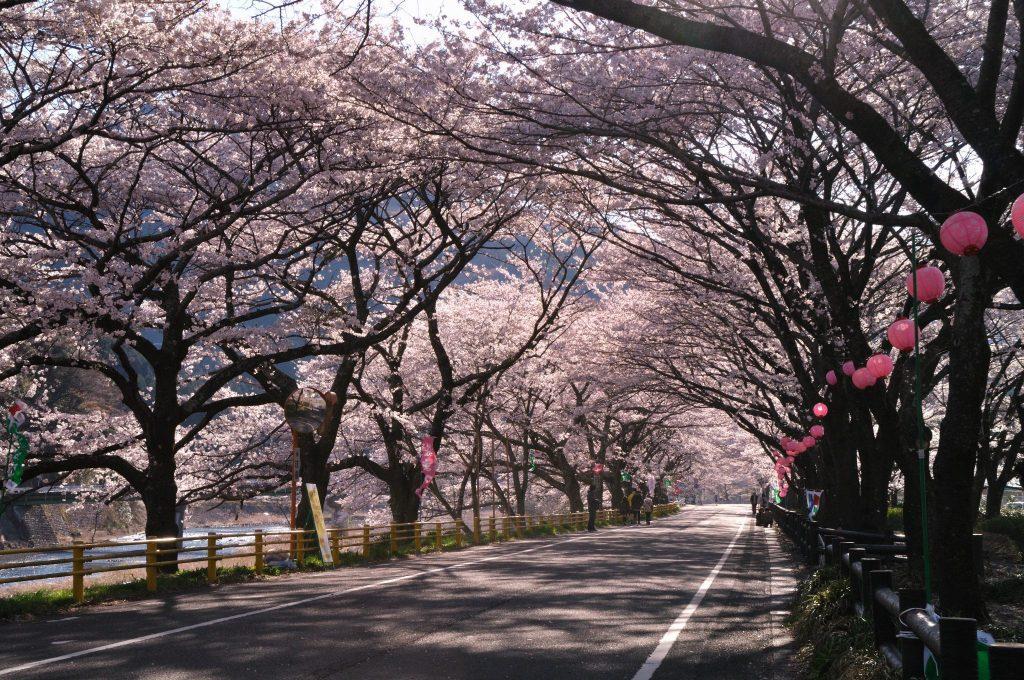 櫻井翔さんが来ていたSLの町。静岡県島田市。蓬莱橋にも!